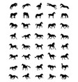 black silhouettes of horses vector image vector image