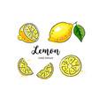 lemon fruit drawing watercolor lemons on a white vector image vector image