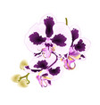 orchid phalaenopsis with spots stem vector image vector image