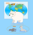 polar bear card vector image