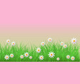 spring grass and chamomiles border on pink vector image vector image