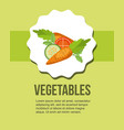fresh vegetables carrot tomato cucumber healthy vector image vector image