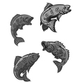 perch carp vector image vector image