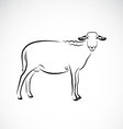 Sheep on white background vector image vector image