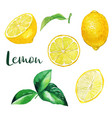 yellow lemon fruits and leaves watercolor fruit vector image vector image