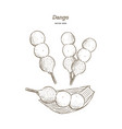 dango japanese dango dessert with 3 different vector image vector image