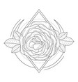 rose flowers in geometrical frame hand drawn vector image