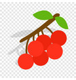 rowan branch isometric icon vector image vector image