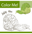 coloring book or page of vegetable vector image vector image