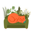 sofa with sleeping cat relax at home cute pet vector image