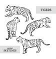 tigers wild cat set white bengal tiger vector image