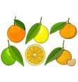 citrus fruits hand drawn sketch vector image