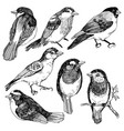 graphic set of hand drawn birds on white vector image