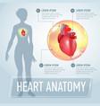 heart infographics banner vector image vector image