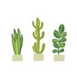 potted plants in pots cactus euphorbia codiaeum vector image vector image