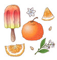 set citrus ice cream vector image vector image