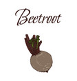tasty veggies beetroot vector image vector image