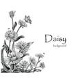 daisy flowers hand drawing vintage on white vector image vector image