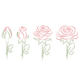 blooming roses vector image vector image