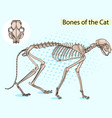 cat pop art skeleton veterinary cat vector image