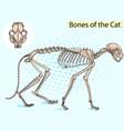 cat pop art skeleton veterinary cat vector image