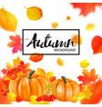 background of orange autumn pumpkins vector image
