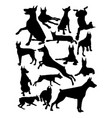 doberman dog animal silhouette vector image