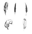 feather bird print design graphic black vector image vector image