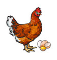 hen chicken and eggs - whole and broken in half vector image vector image