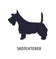 scottish terrier or scottie adorable small dog of vector image vector image