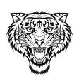tiger angry tiger face tiger knife head tiger ta vector image