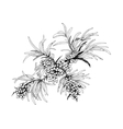 Buckthorn berries vector image