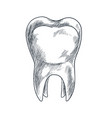 hand drawn tooth with roots sketchy style vector image