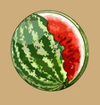 painted round green striped watermelon with an vector image