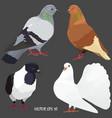 four realistic domestic pigeons of different breed vector image vector image