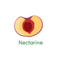 nectarine slice healthy fruit half peach objects vector image