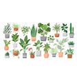 houseplants in pots vector image vector image