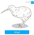 kiwi learn birds coloring book vector image vector image
