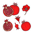 set of pomegranate vector image vector image