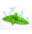 fresh mint leaves vector image