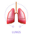 human lungs internal respiratory system organ vector image vector image