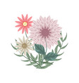 set of flowers and dahlias for decoration flower vector image vector image