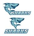 cartoon aggressive shark for sport team vector image vector image