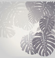 monstera leaves tropical background vector image vector image