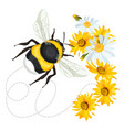 bumblebee closeup head trace swirled line on vector image