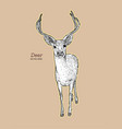 deer animal hand draw sketch vector image