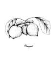 hand drawn of bacupari or garcinia gardneriana on vector image vector image