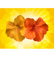 hibiscus flowers and yellow background vector image vector image