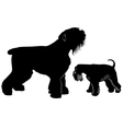 miniature schnauzer and black terrier vector image