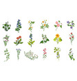 wild flowers hand drawn set detailed vector image